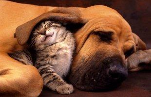 Birlikte uyuyan sevimli hayvanlar