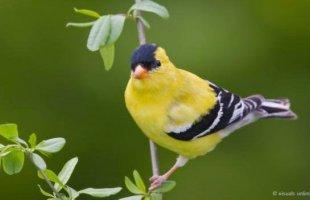 Doğa sarıyla güzel