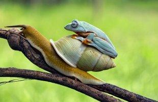 Dünyanın En Tembel Kurbağası