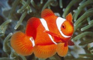 Okyanus Balıkları