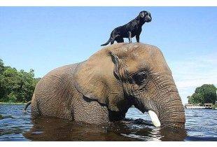 Sıradışı Dostluklar