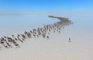 Tuz Gölü Flamingo Çiftliği