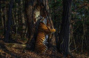 Yılın en iyi vahşi yaşam fotoğrafları